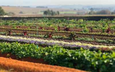 The produce that Mason Farming has been gifted by Mother Earth